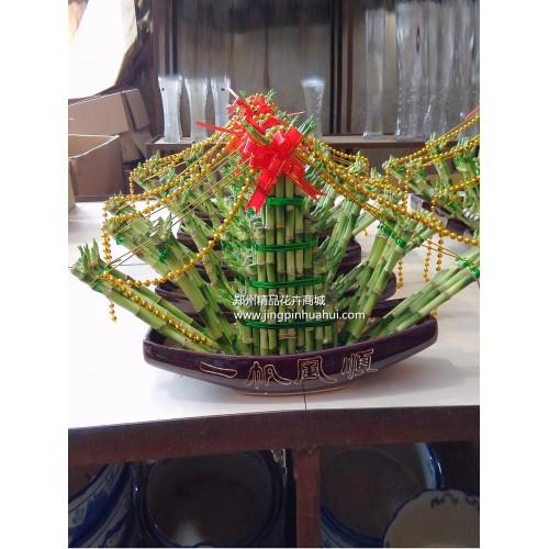 水培---富贵竹