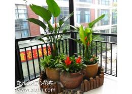植物造景案例