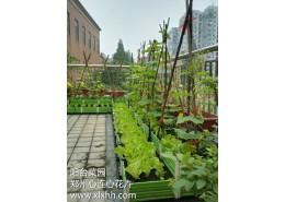 阳台菜园设计