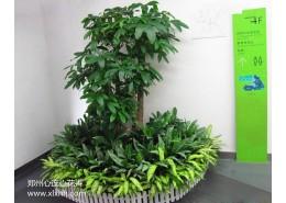 郑州室内植物造景设计