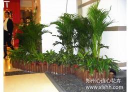 郑州商场室内植物造景