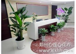 办公室花卉租赁方案及建议