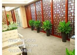 办公室门厅、走廊适合摆放的植物