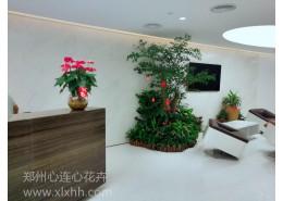 室内植物景观
